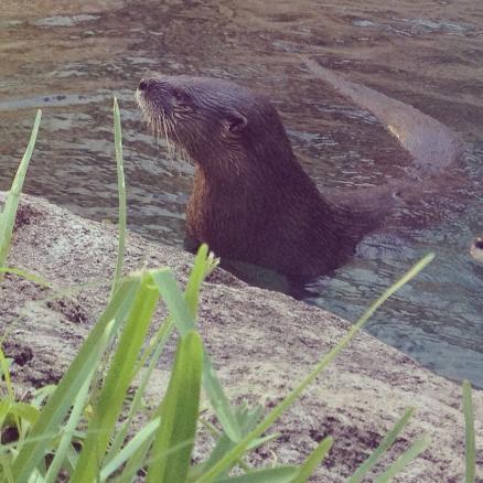 Museum otter