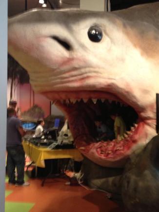 Museum Shark